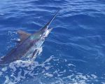 San Juan International Billfish Tournament