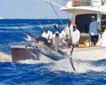 San Juan Blue Marlin